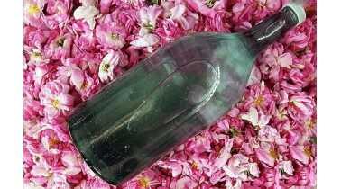 گلاب ممتاز ارگانيک